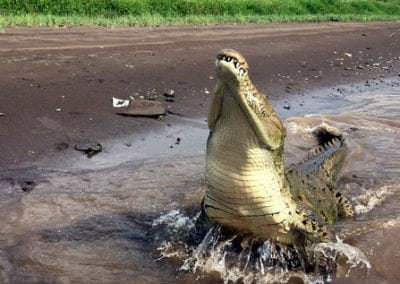 costa rica crocodile tours